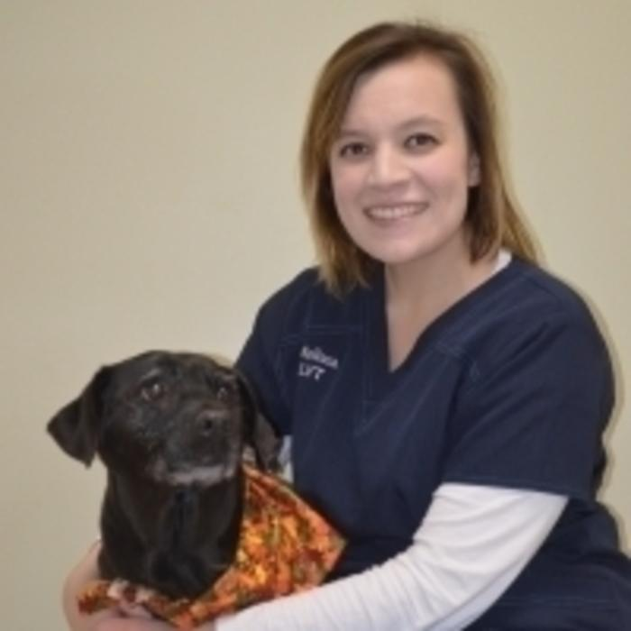 Melissa<br>Licensed Veterinary Technician  photo